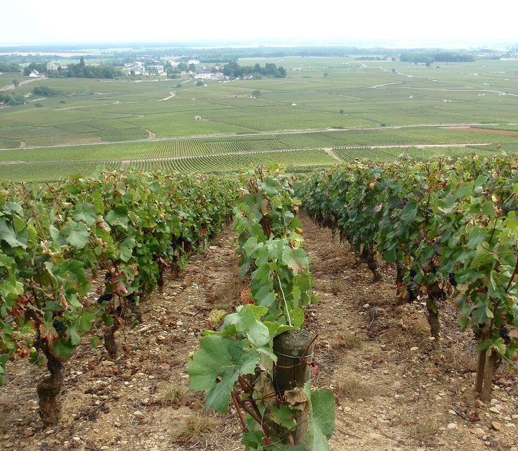 Vineyards between Dijon and Beaune, France
