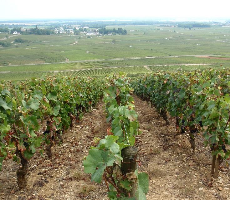 Vineyards between Dijon and Beaune, France
