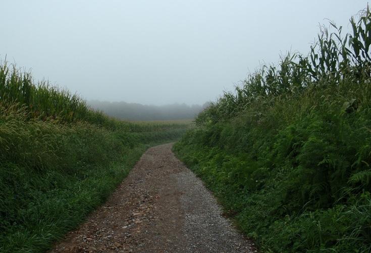 Cornfields on the Chemin de Saint-Jacques