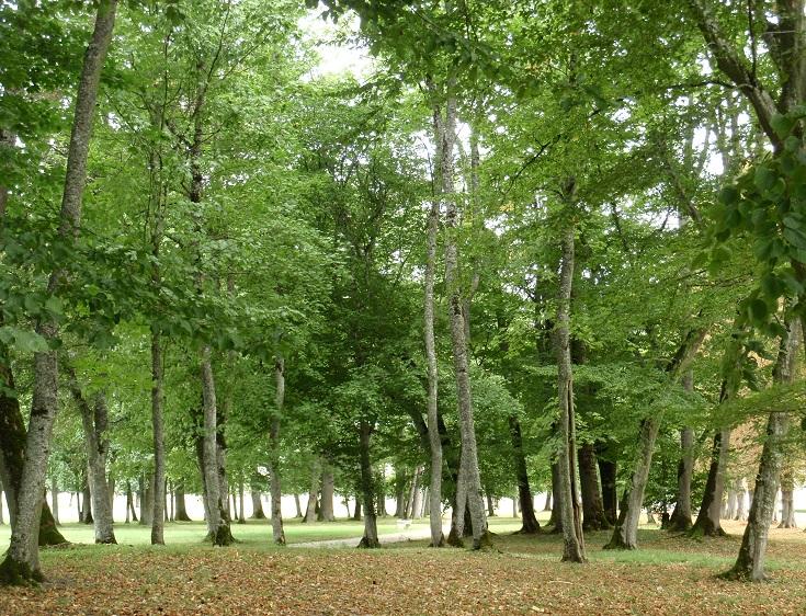 Parkland surrounding Chateau Ancy-le-Franc, Burgundy Canal, France