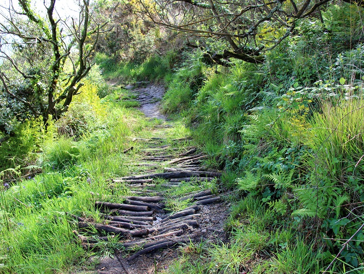 Muddy section of track overlaid with small logs to provide a sturdy path