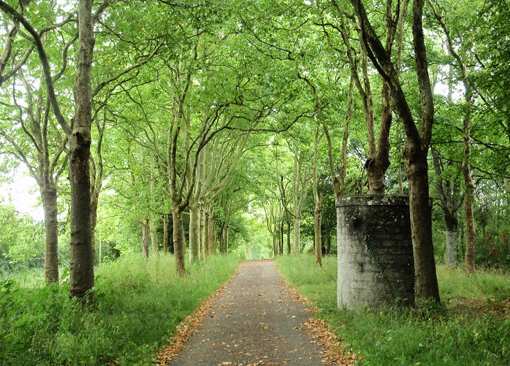 Wide path through planting of trees, any brick air-vent to the right